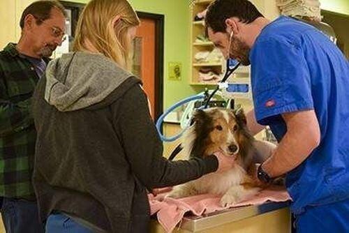 Pies uratowany przed uśpieniem: poznajcie Olliego