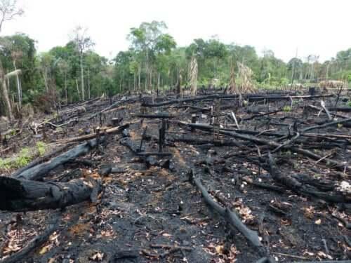 Zgliszcza po pożarze lasu