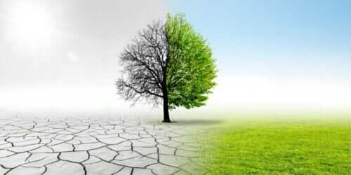 Drzewo w dwie pory roku