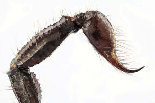 Kolec na ogonie skorpiona