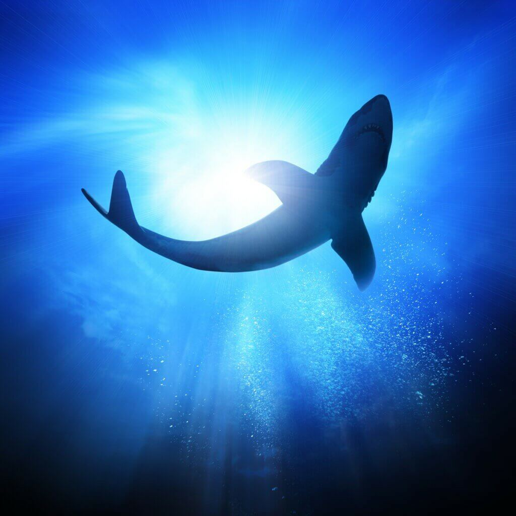 Kłujący rekin: cechy charakterystyczne i siedlisko