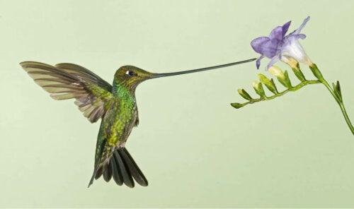 Koliber ssie nektar z kwiatka