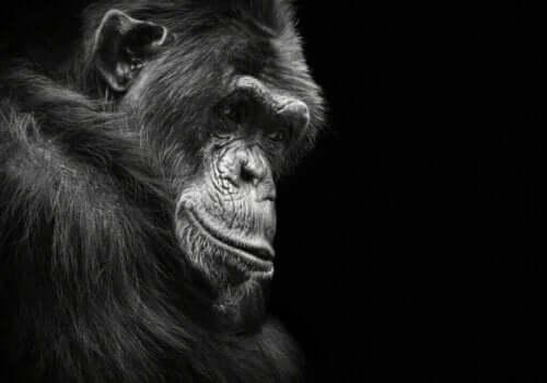Czy wiesz, że zwierzęta mogą cierpieć z powodu depresji?