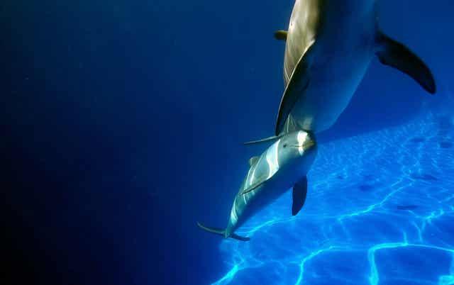 Matka z małym delfinem
