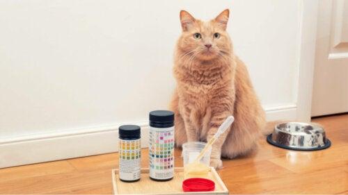 Analiza moczu kot, i diagnostyka problemów trawiennych