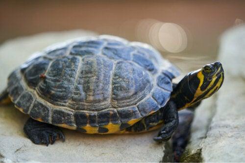 100 propozycji imion dla żółwi domowych