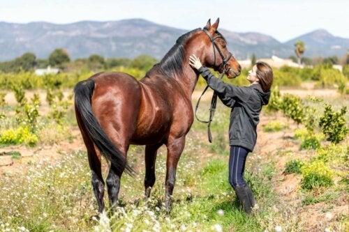 Koń arabski i kobieta, a zapalenie mózgu koni
