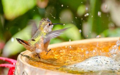 Koliber kąpie się w morzu i kwiaty które uwielbiają