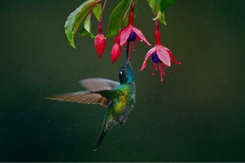 Kwiaty, które przyciągają kolibry