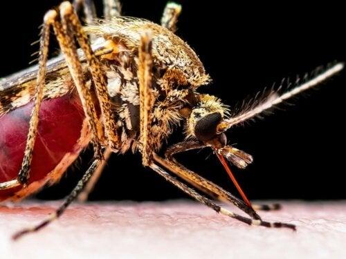 Komar na skórze, przyczyna przemnożenia wirusa,, który wywołuje zapalenie mózgu koni