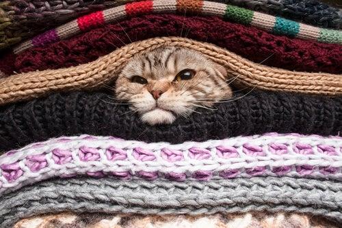 Kot między kocami a oryginalne legowisko dla kota
