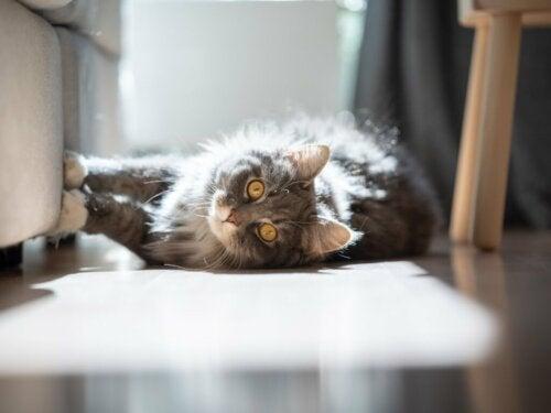 Dlaczego koty lubią słońce?