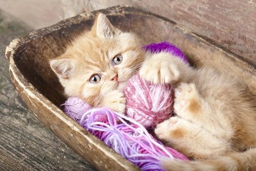 Kotek leży w drewnianej misce