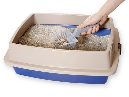 Kuweta wypełniona piaskiem, jak czyścić kuwetę?