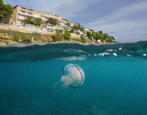 Meduza na plaży w wodzie
