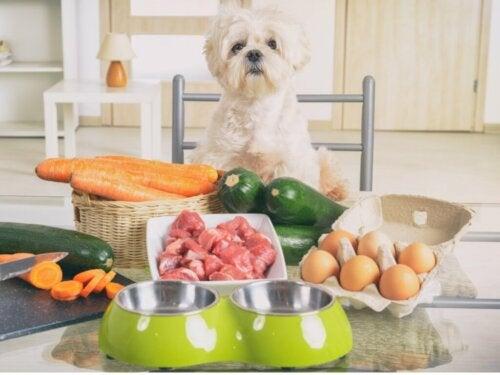 5 przykładów zdrowej żywności dla psów