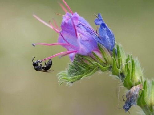 Pszczoła zapyla kwiatki