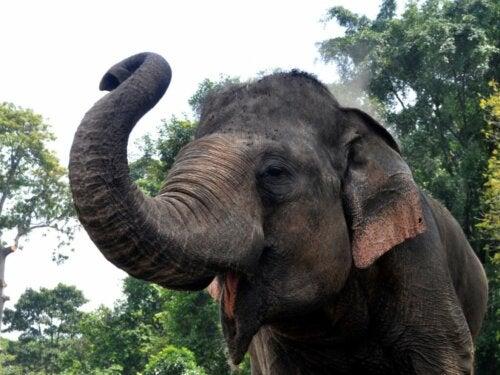 Niezwykłe zachowanie słoni