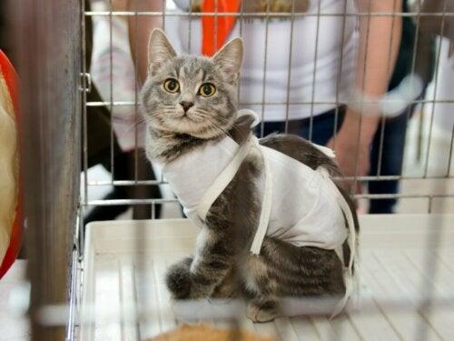 Opieka nad wysterylizowanym kotem