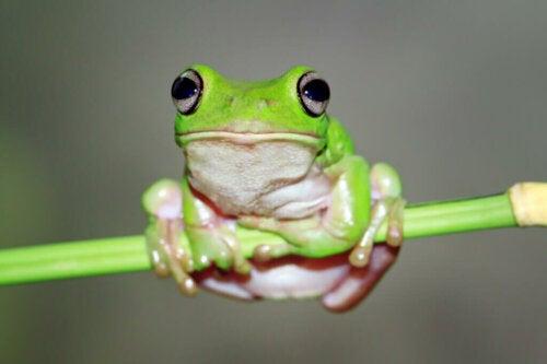Poznaj techniki przetrwania u żab