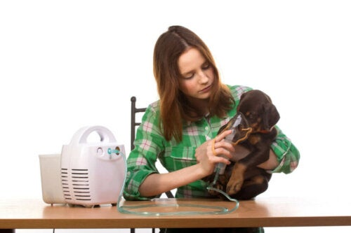 Zapalenie oskrzeli u psów: objawy, przyczyny i leczenie