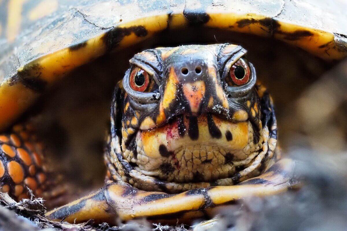 Żółw skorupa, propozycje imion dla żółwi
