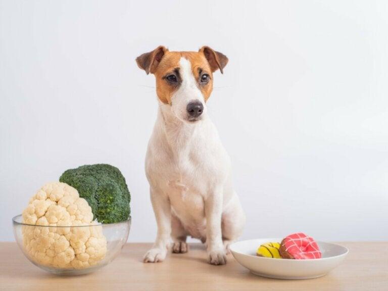 Czy psy mogą jeść kalafior?
