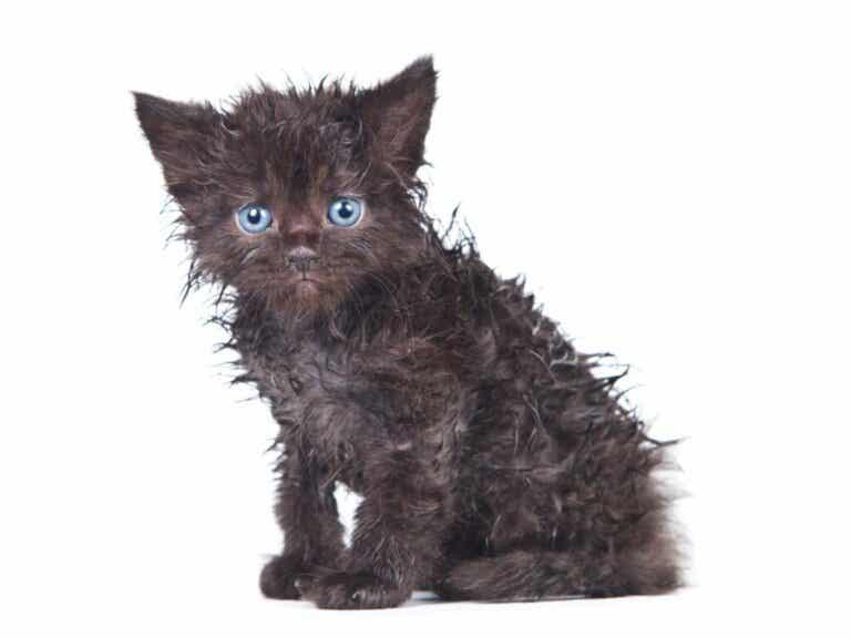 Dlaczego mój kot się nie myje?