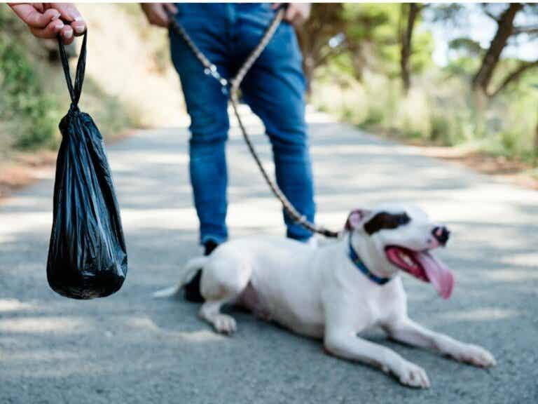 Czarny kał u psów: czym jest spowodowany?