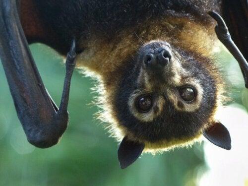 Rodzaje nietoperzy i ich charakterystyka