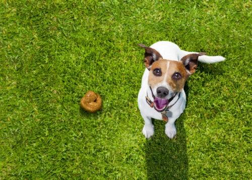 Pies załatwił się na trawniku