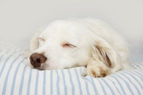 Pies śpi w swoim legowisku
