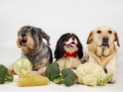 Psy przy stole z warzywami