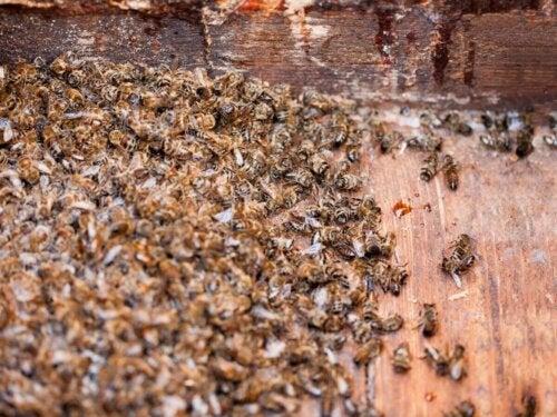 Śmierć masowa pszczół
