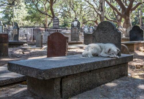 Czy psy potrafią przewidzieć śmierć?