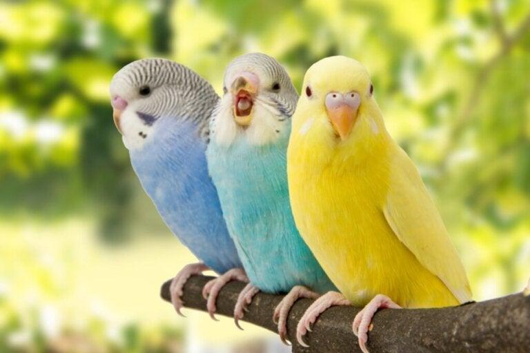 5 oznak, że twój ptak jest szczęśliwy