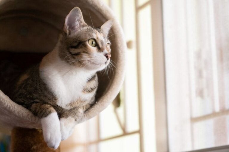 Domowa siłownia dla kotów – zrób to sam!