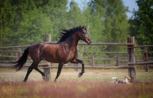 Charakter konia