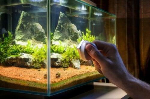 Czyszczenie szyby akwarium