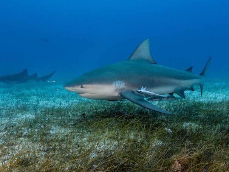 Jak rodzą się rekiny?