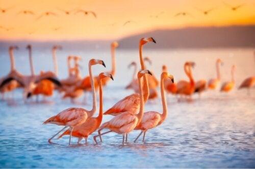 Dlaczego flamingi są różowe?