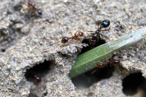 Jak odstraszyć mrówki?