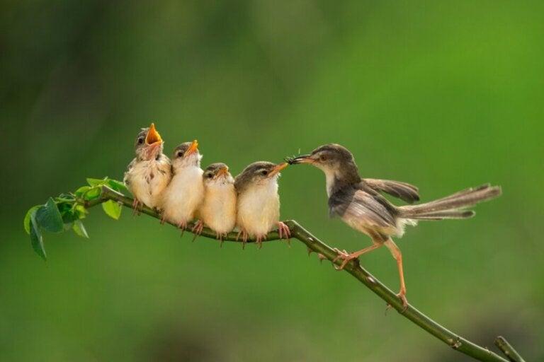 Co jedzą młode ptaki?