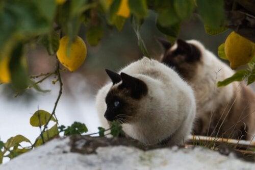 Kot siedzi pod drzewem cytrynowym