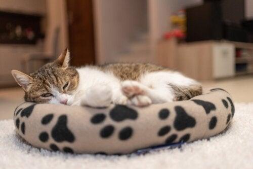 Gdzie powinien spać twój kot?