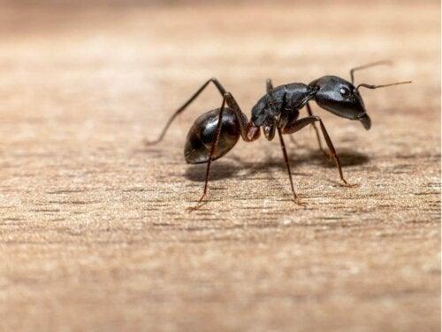 Mrówka na podłodze