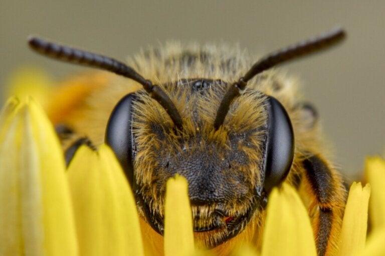 Jak widzą pszczoły?