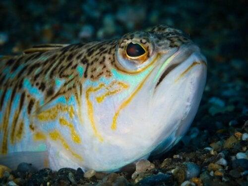 Ryba ostrosz przykład jednego z niebezpiecznych zwierząt