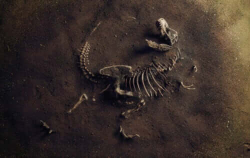 Co to jest paleoekologia?