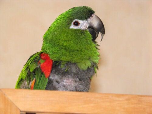Papuga siedzi w ciszy, a czy twój ptak jest szczęśliwy?